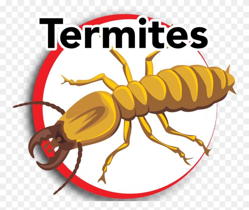 Termites - Termite Clipart