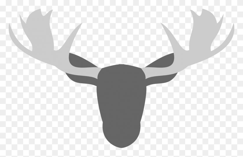 1503x933 Thomoose Coffee - Moose Antlers Clipart