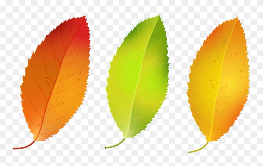 5964x3603 Three Fall Leaves Set Png Clipart - Free Fall Clip Art