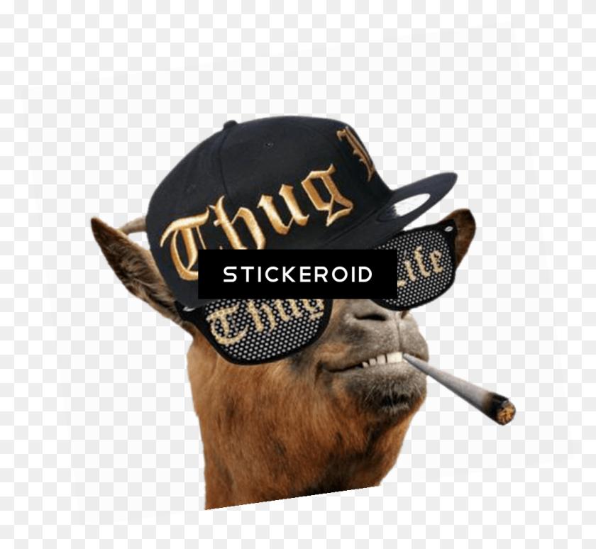 Thug Life Gold Chain Thug Life Hat Thug Life Sticker Image - Thug Life Hat PNG