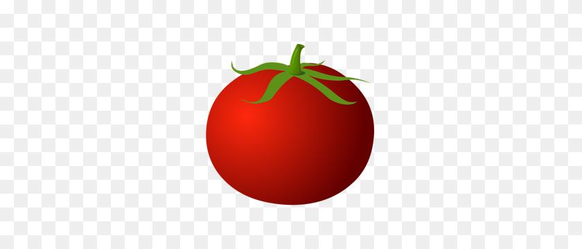 15 Tomato Clipart Png For Free Download On Mbtskoudsalg - Transparent  Tomatos Clip Art - 1879x1294 PNG Download - PNGkit