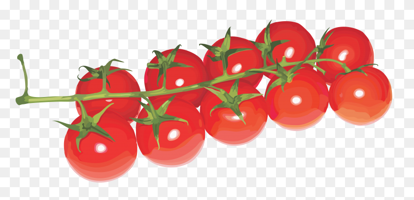 Tomato Png Web Icons Png - Tomatoes PNG