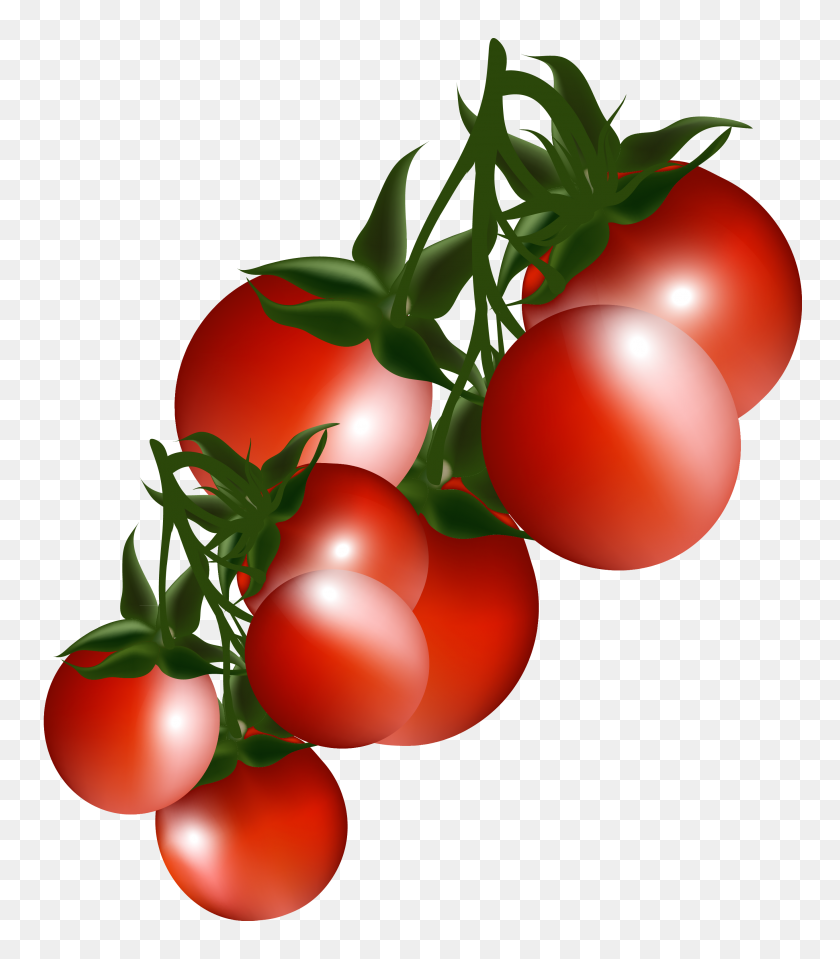 Tomatoes Branch Png Clipart - Tomatoes PNG