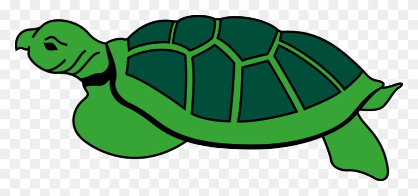 Tortoise Modern Sea Turtles Reptile Loggerhead Sea Turtle Free - Sea Turtle Clipart PNG