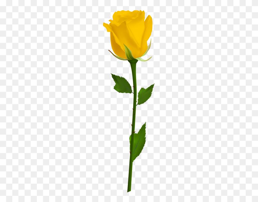 Trandafiri Yellow Roses - Yellow Rose PNG