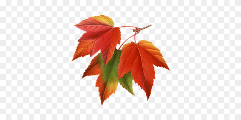 Transparent Autumn Leaves Falling Png - Leaves Falling PNG