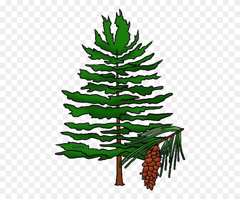 Christmas Tree Cypress Tree Evergreen Tree Fire Tree Tree Icon