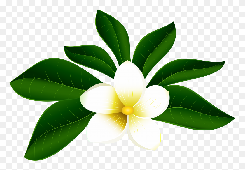Tropical Exotic Flower Png Clip Art - Tropical Border Clipart