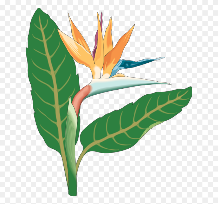Tropical Flowers Border Stock Illustration Illustration Of Bird - Tropical Bird Clipart