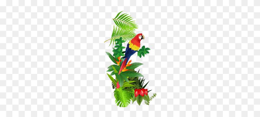 Tropical Rainforest Animals Clipart - Rainforest Animals Clipart