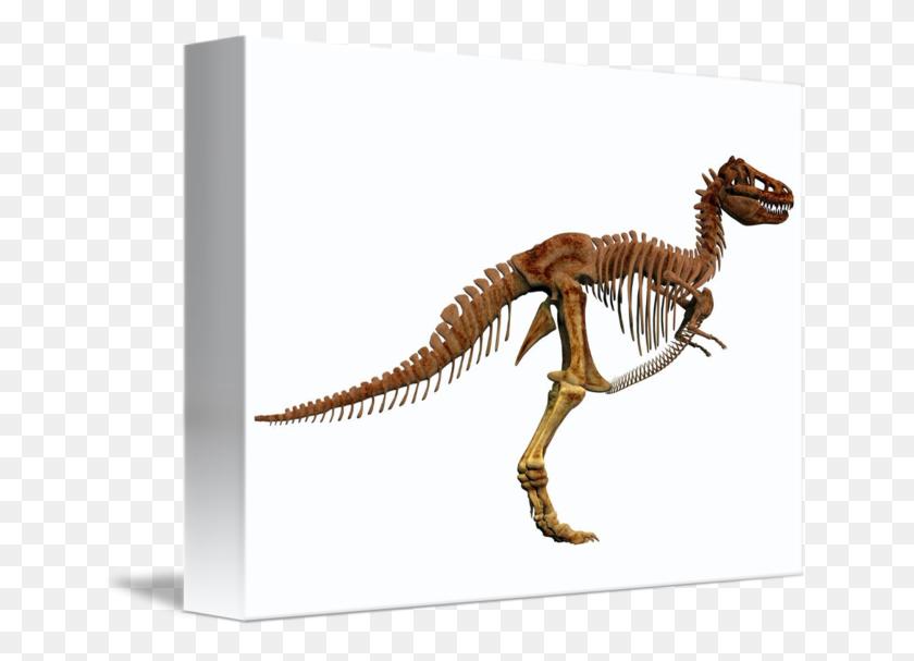 Tyrannosaurus Rex Dinosaur Skeleton - Dinosaur Bones PNG