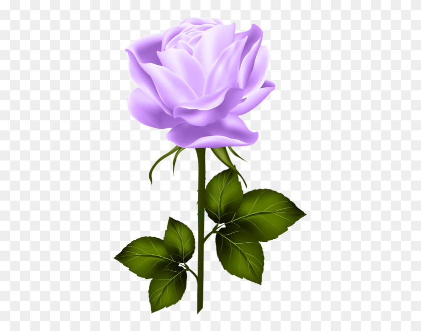 Various Pics Rose, Hybrid Tea - Single Flower Clipart