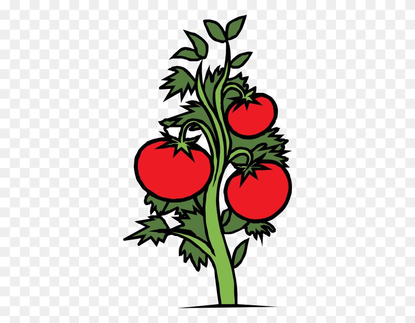 Vine Clipart Tomato Vine - Rose Vine Clipart