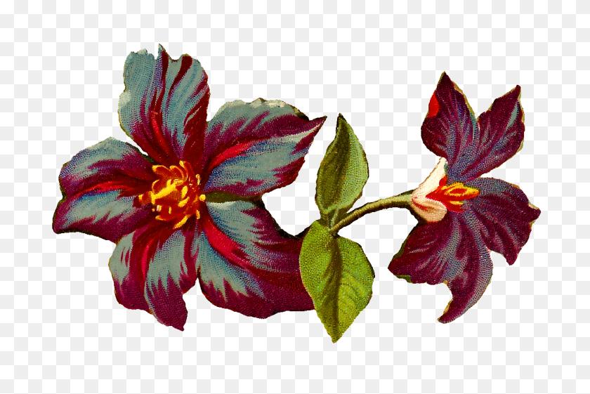 Vintage Flower Illustration Png, Vintage Illustration - Vintage Flower PNG