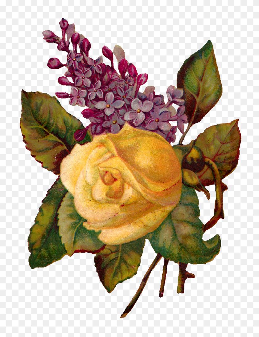 Vintage Flower Illustration Png, Vintage Illustration - Vintage Rose PNG