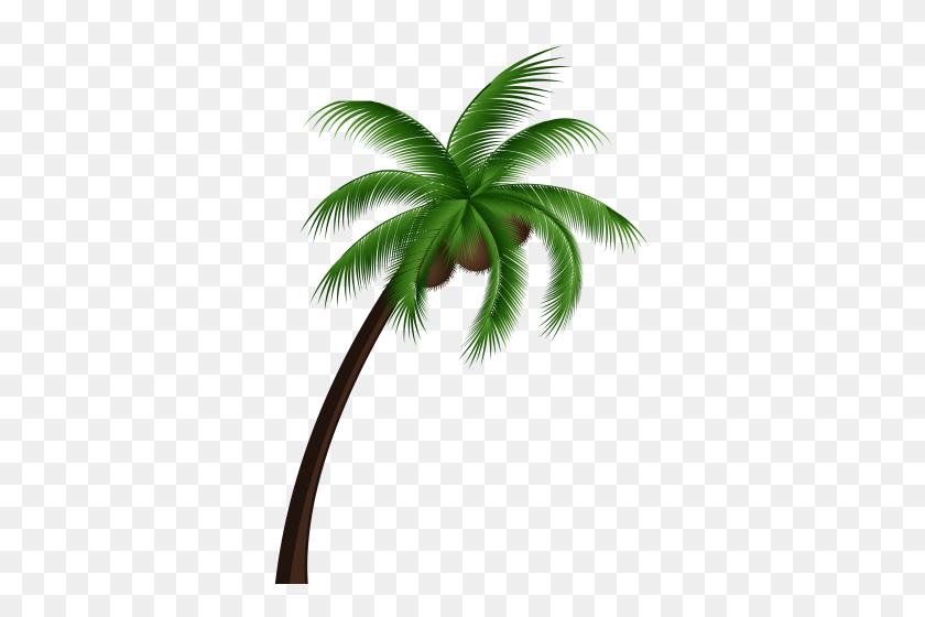 Wala Lang Palm Tree Png - Palm Tree Beach Clip Art