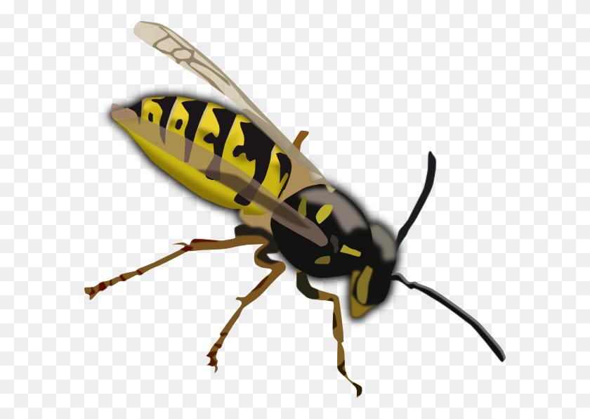 Wasp Clip Art - Termite Clipart