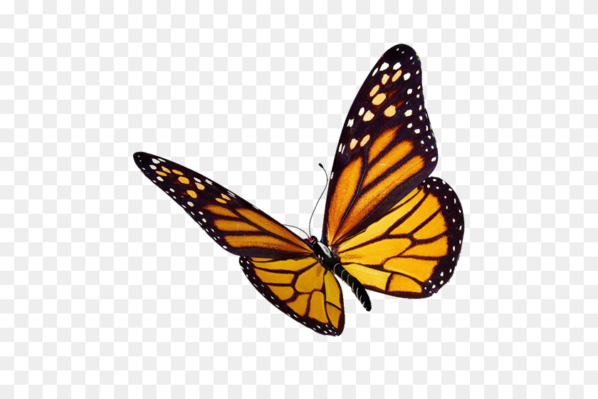 What Is The Difference Between A Moth And A Butterfly - Moth PNG
