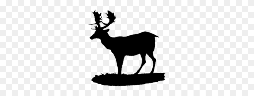 Whitetailed Deer Clipart - Elk Clipart Black And White