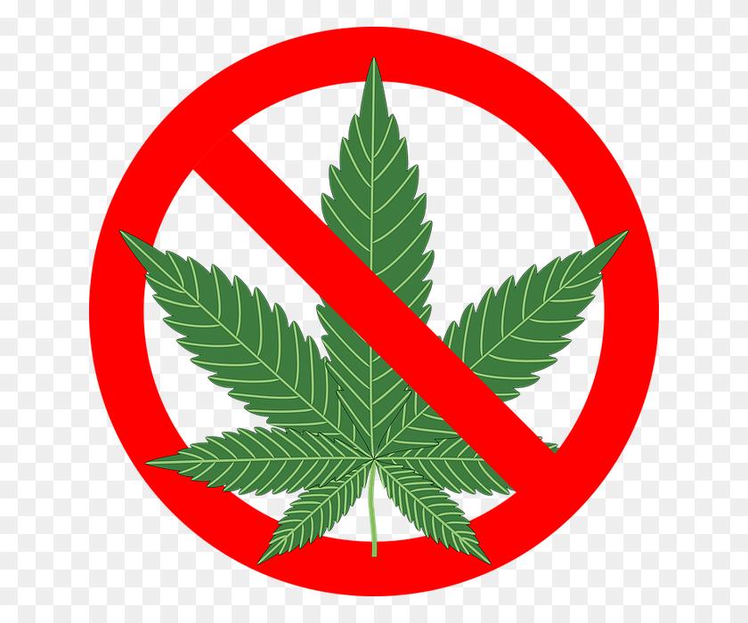 Курение марихуаны запрещено фото куст конопли