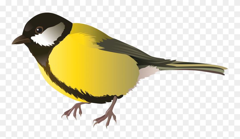 3000x1646 Yellow Bird Png Clipart - Tail PNG