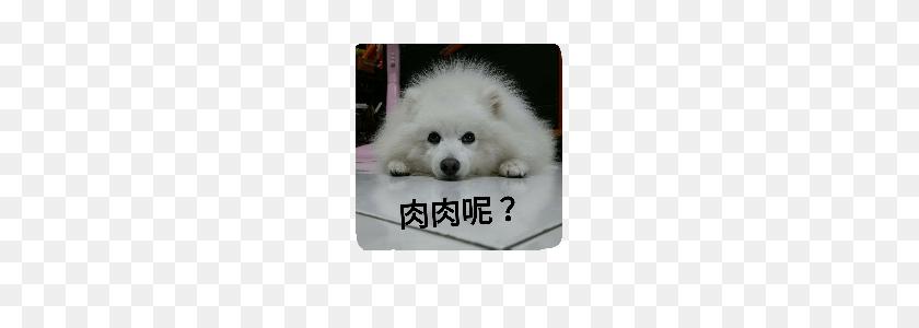 Yuki's Happy Dog Life Line Stickers Line Store - Happy Dog PNG