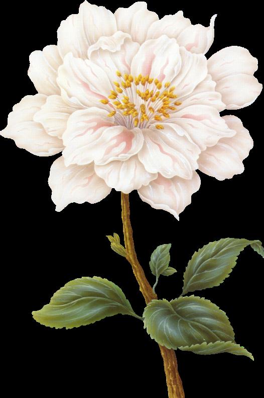 526x791 Flower